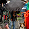 Krewe of Barkus Parade 02 23 2014-724