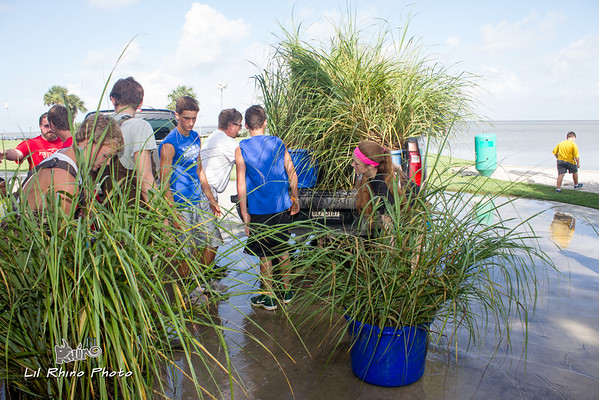 Marsh madness - Eagle Scout Project