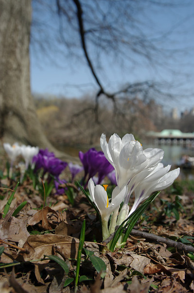 Central Park-45