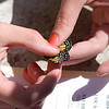 Maryville Monarch Butterfly Tag-&-Release Sept 2007