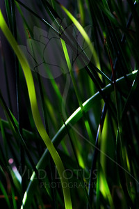 How Green The Sea...  Plant pictured :: Grass  Plant provided by :: Tagawa Gardens  093012_002496 ICC sRGB 16in x 24in pic