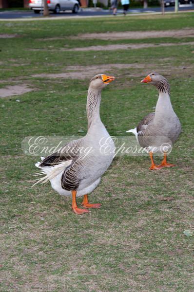McKinley-Birds-16