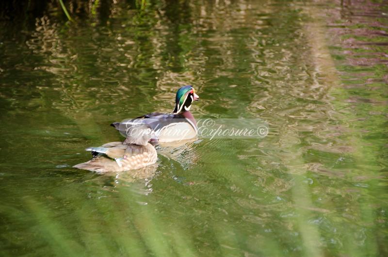 McKinley-Birds-05