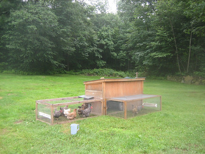 Moveable chicken coop  (moved to fresh grass each night)