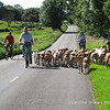 Hound Exercise 12th August 2007 Mendip Farmers Hunt