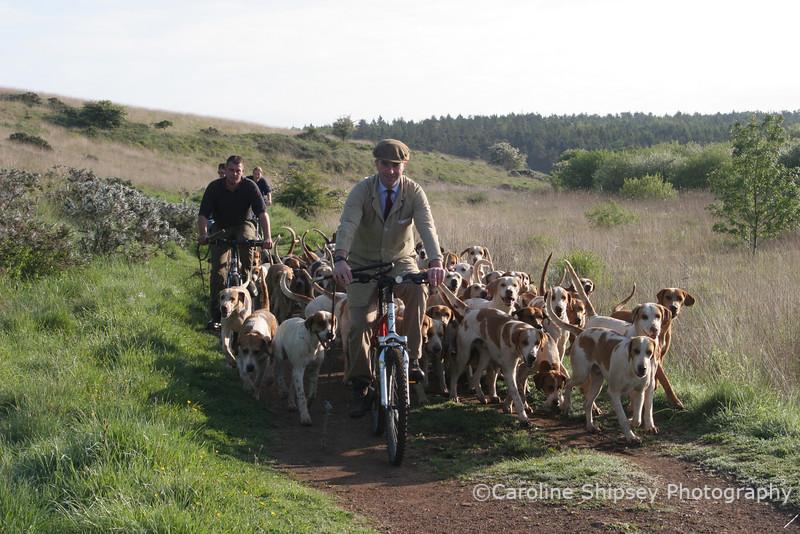 Mendip Farmers Hound Exercising at the Minories, May 2007 Mendip Farmers Hunt