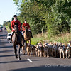 Hound Exercise 31st July 2007 Mendip Farmers Hunt