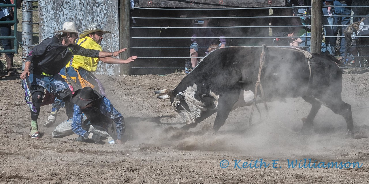 Bull riding - 8