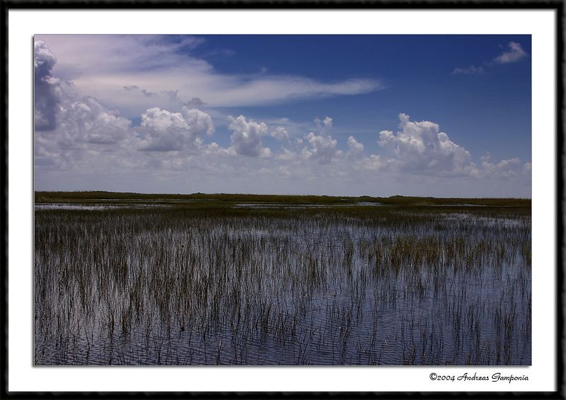 The Florida Everglades...