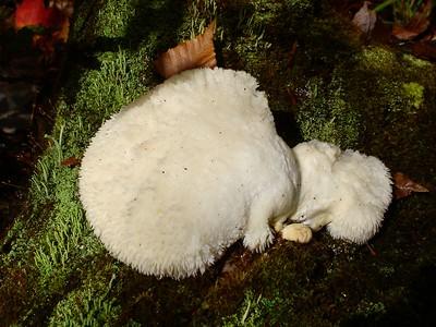 Fuzzy animal or mushroom???