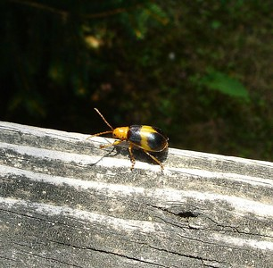 Oliver, can you identify this bug-a-bug please?