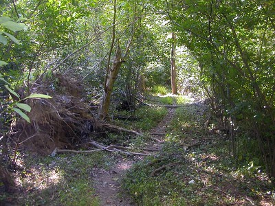 Typical trail scene on this hike.  Much like walking through a tunnel!