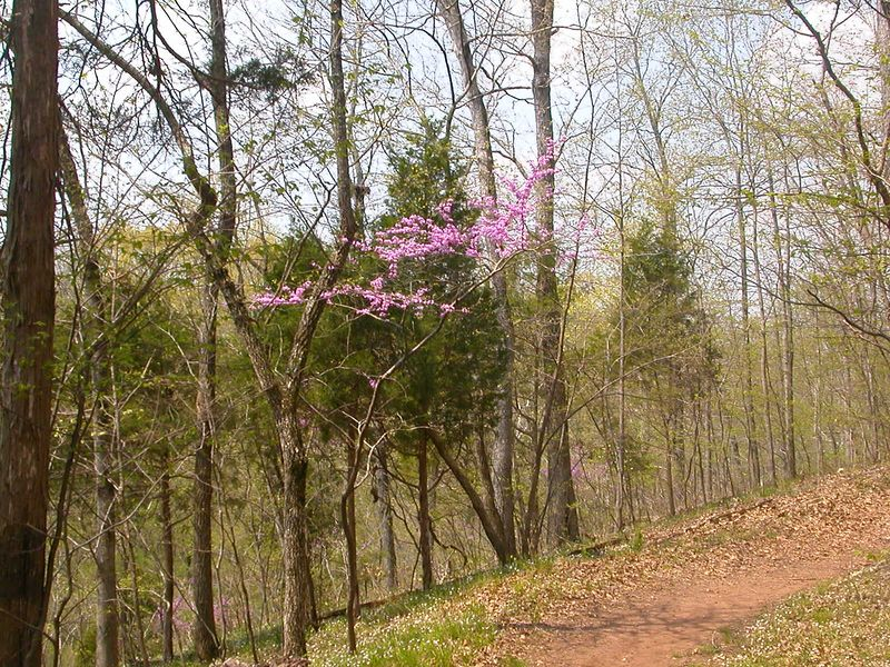 Love that Redbud.