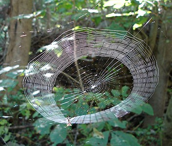 Oh what a web we weave.  (Photo by Kirk)