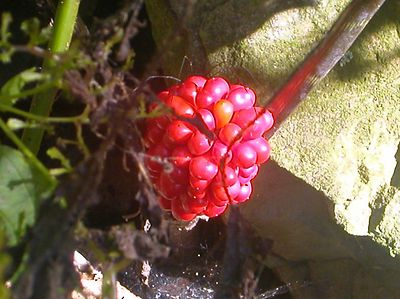Berries that fell from a tree?  I first thought this was a flower.  What do I know!