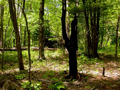 Corbin Cabin Cut Off Trail...  What is this another cabin?