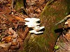 Last but not least.....the fungi of the week.  Is this the corkscrew mushroom?