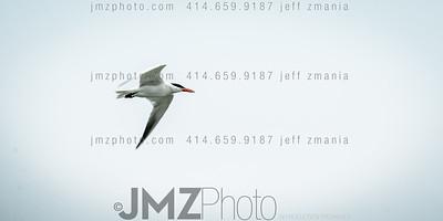 Milwaukee Airshow_20130803-398