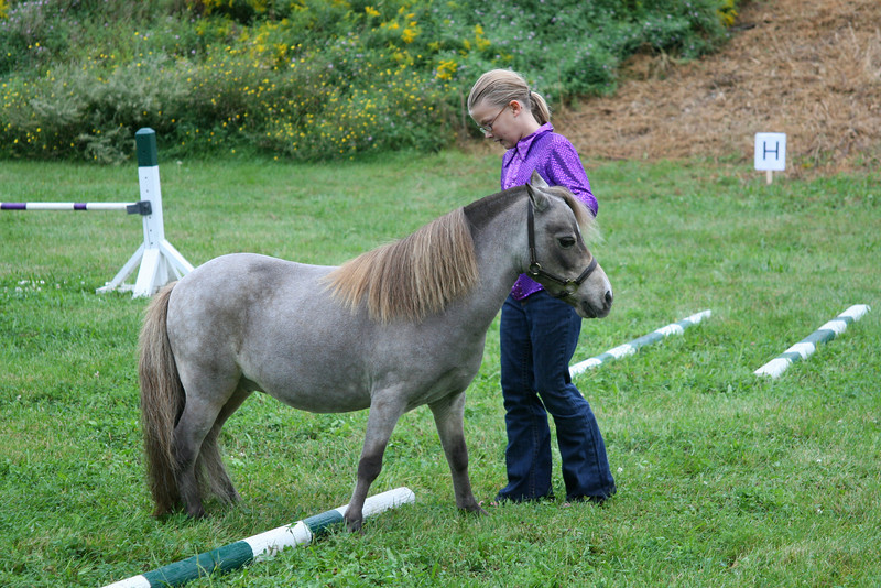 Miniature Horse demonstration