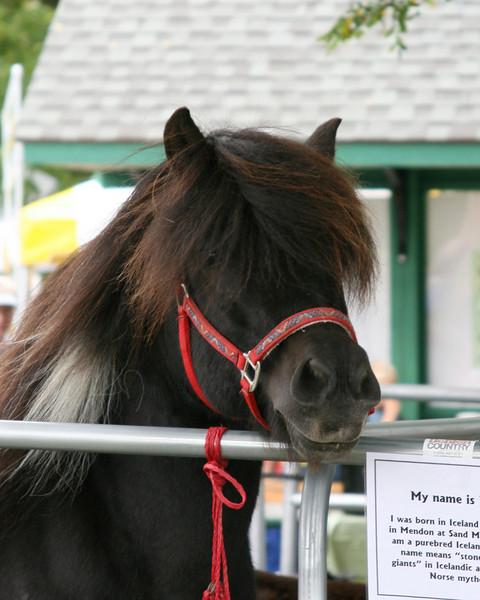 Flygill (Icelandic horse)