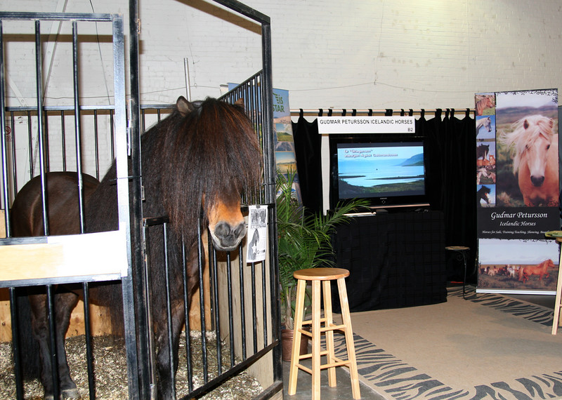 <h5>Kalman and the Gudmar Petursson Icelandic Horses booth display</h5> <br>