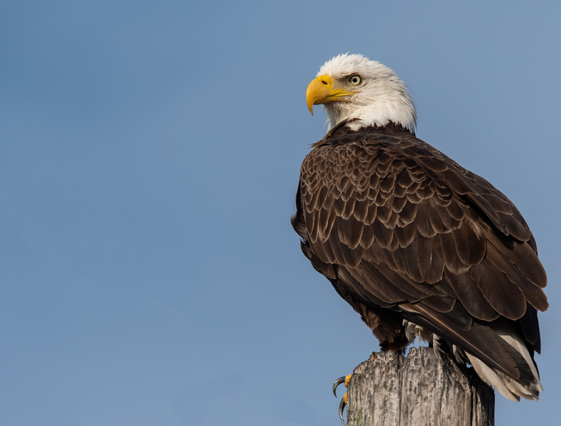 Location - Merritt Island Wildlife Refuge,