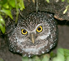 • Burrowing Owls at Brian Piccolo Park<br /> •  I can see you!