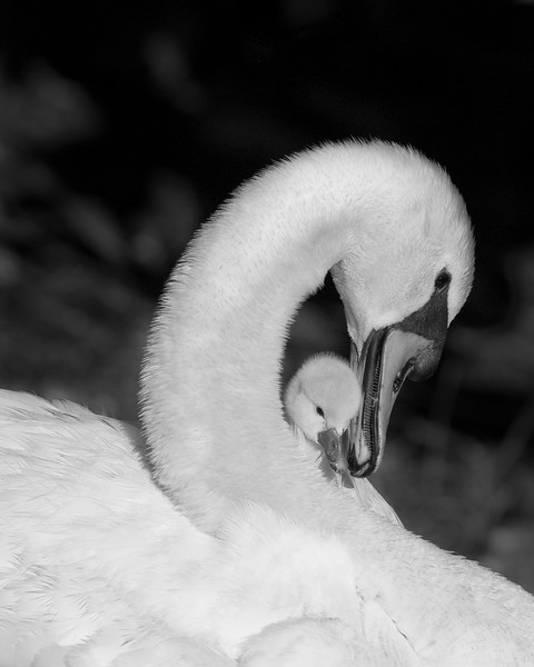 This was 3rd place for B&W photo winner at the Camera Club of Brevard Annual Print Contest for 2009