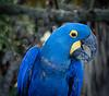 Location - Brevard Zoo