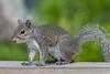 Close-up of this squirrel