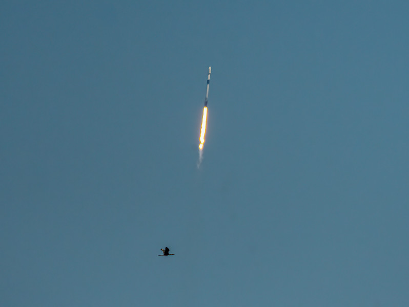 Space X Launch with an Anhinga bird below the rocket flame.