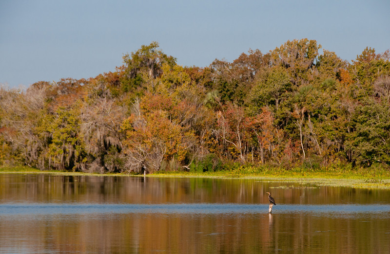 • DeLeon Springs State Park<br /> • Scenic from the boat pier<br /> • Yes, that's Double Crested Cormorant