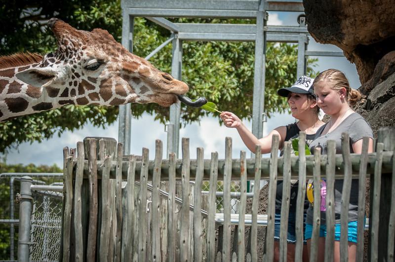 My granddaughter's friend, Hannah, feeding the Giraffe