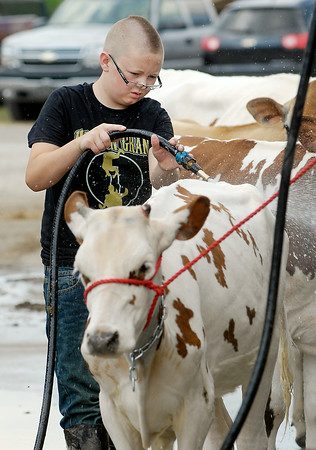 John P. Cleary | The Herald Bulletin<br /> Jeron Mason gives his animal a cleaning in preparation for judging Tuesday at the 4-H Fair.