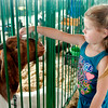 John P. Cleary | The Herald Bulletin<br /> 4 year old Rozalyn Walters was looking at the goats when this one came up to get a head scratch Monday at the Madison County 4-H Fair.