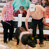 John P. Cleary | The Herald Bulletin<br /> All eyes are on judge Steve Rodibaugh as he checks Paige Duppses crossbred barrow during judging Monday at the Madison County 4-H Fair.
