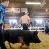 John P. Cleary | The Herald Bulletin<br /> Madison County 4-H Fair.