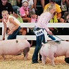 John P. Cleary | The Herald Bulletin<br /> Mackenzie Swango and Abby Gough pass each other as they keep their pigs moving around the show arena during the 4-H Fair Swine show judging Monday.  For a gallery of photos to view or purchase, visit<br /> photos.heraldbulletin.com.