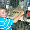 Ken de la Bastide | The Herald Bulletin<br /> Holden Harless brushes his American Hen Andrea in preparation for the<br /> judging Monday at the Madison County 4-H Fair. Andrea placed second in<br /> her class.