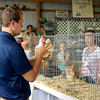 John P. Cleary | The Herald Bulletin<br /> Judge Johnathon Patterson takes a close look at this hen as he judges this years 4-H Poultry Show Monday at the Madison County 4-H Fair.