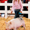John P. Cleary | The Herald Bulletin<br /> Abby Gough keeps her eyes toward the judge as she keeps her pig moving around the show arena Monday during the 4-H Swine Show.