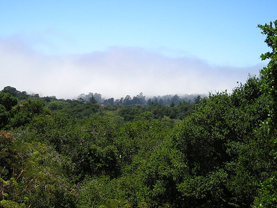 Just past Capitola, at the top of a hill, there was a Vista Point. I was in the bright sun, but Monterey Bay had been consumed by the legendary California fog bank.
