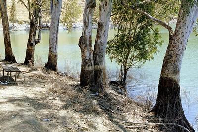 Lexington Reservoir. Tree trunks along the shore