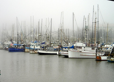 The Moss Landing harbor seemed like a lonely place on a foggy summer Saturday.