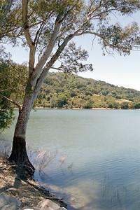 Lexington Reservoir and tree by shore