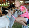 Alicia Bateman ,16, pets her goat Cricket as they line up for the Celebrity Goat Dressing Contest during the Montgomery County 4-H Fair in Skippack Township on Saturday August 9,2014. Photo by Mark C Psoras