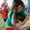 A member of the 4-H Poultry Club picks up his goose during the Montgomery County 4-H Fair in Skippack Township on Saturday August 9,2014. Photo by Mark C Psoras