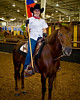 HorseShow-10