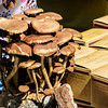 MushroomFest_021