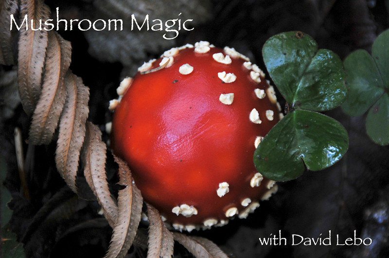 Mushrooms! class with David Lebo